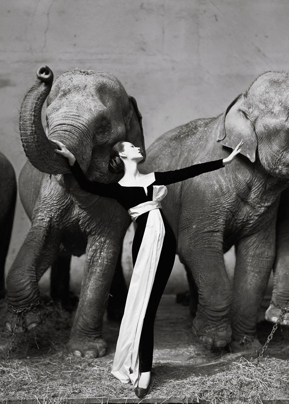 Dovima-with-elephants,-Evening-dress-by-Dior,-Cirque-d'Hiver,-Paris,-August-1955